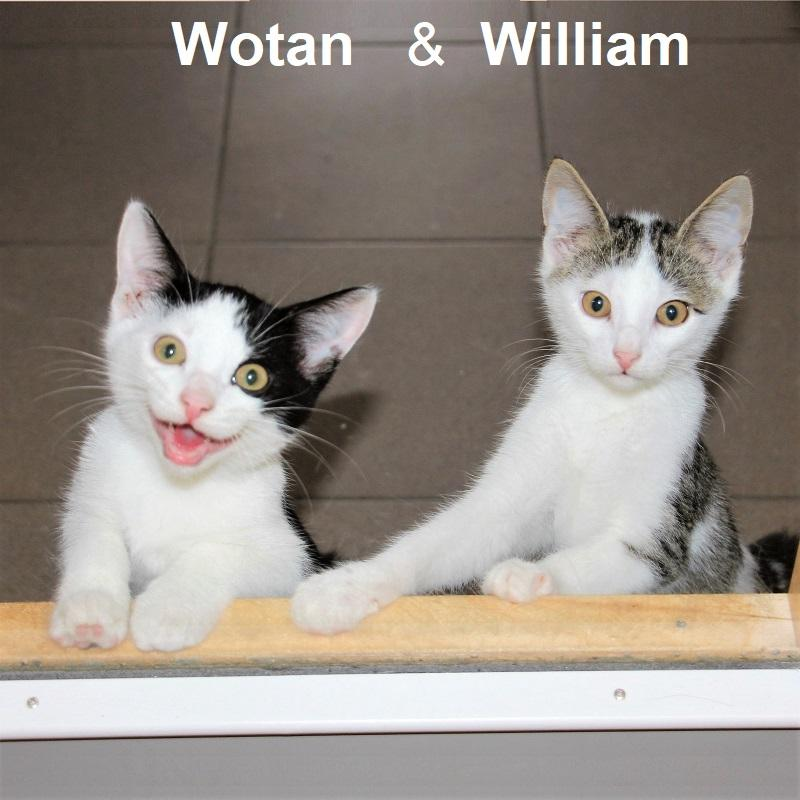 Wotan und William