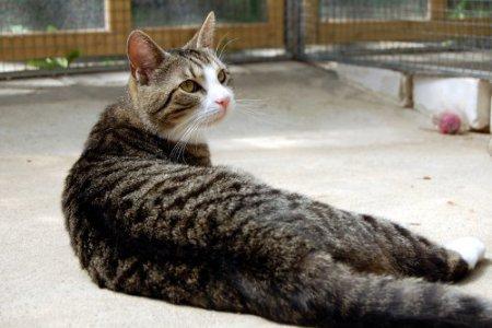 Tierpatenschaft Katze