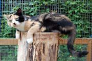 Erwachsene Katzen