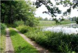 Teichgebiet Niederspree