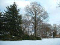 Park Rothenburg 008 net