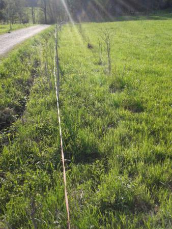 Feld- und Wiesenhecke