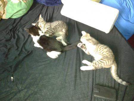 Momo,Josi und Jojo