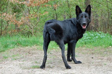 Tierpatenschaft Hund