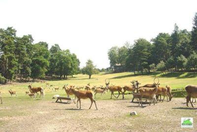Wildpark Johannismühle bei Baruth