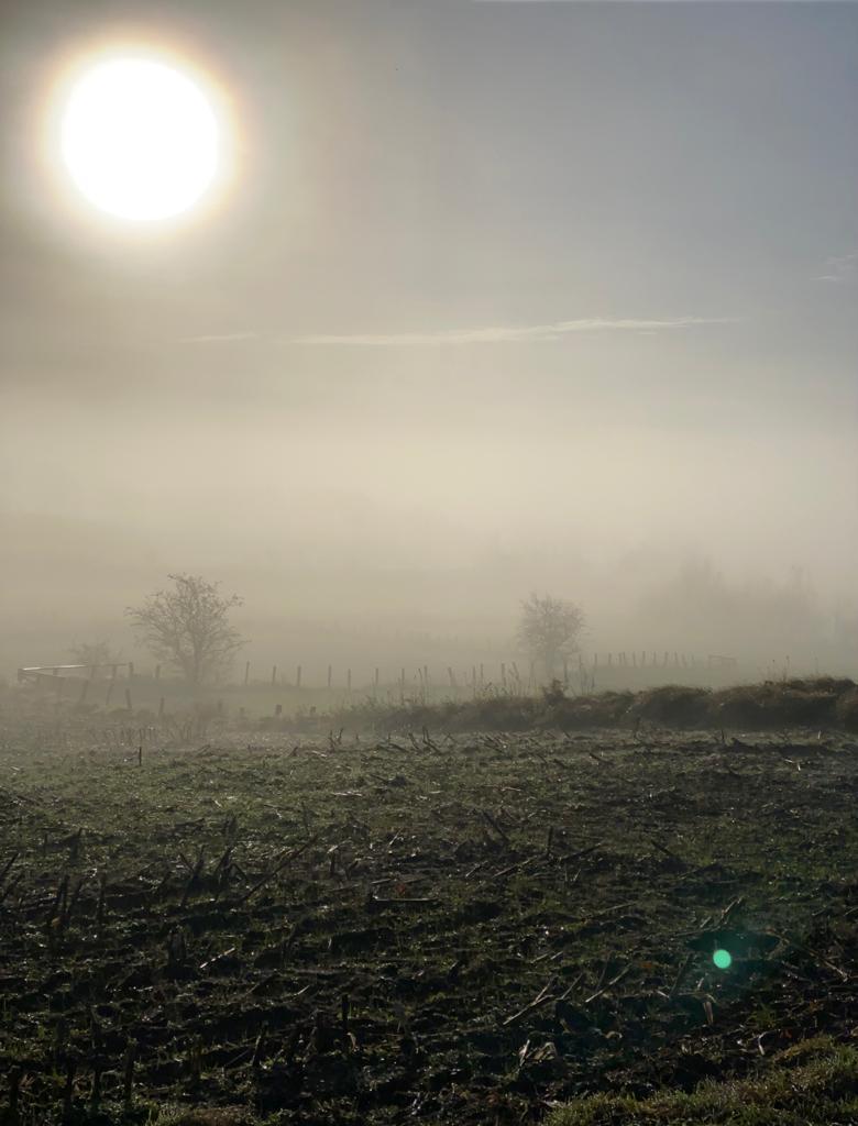 Sieverstedt im Nebel (Nov. 2020)
