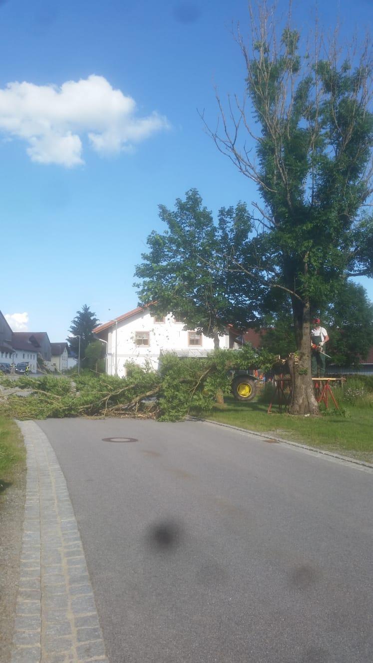 Baum-Fällung/Straßensperre Mitterbichl 1