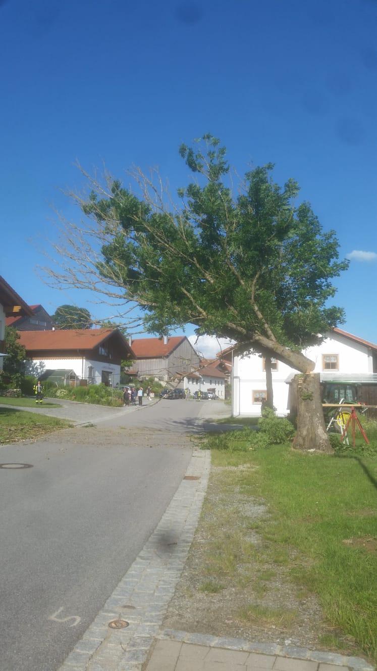 Baum-Fällung/Straßensperre Mitterbichl 2