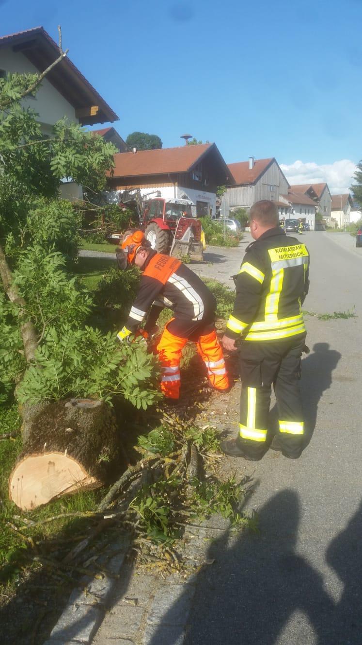 Baum-Fällung/Straßensperre Mitterbichl 4