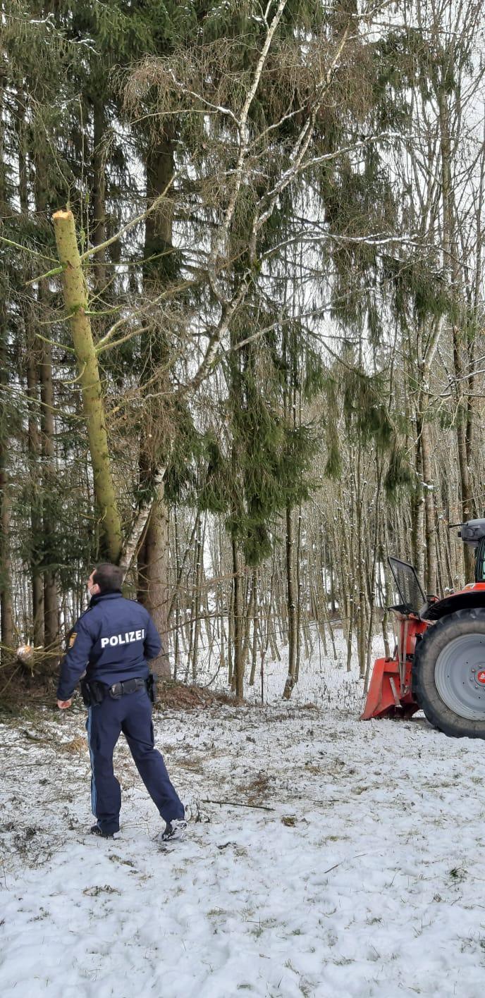 Waldunfall Sommersberg 1