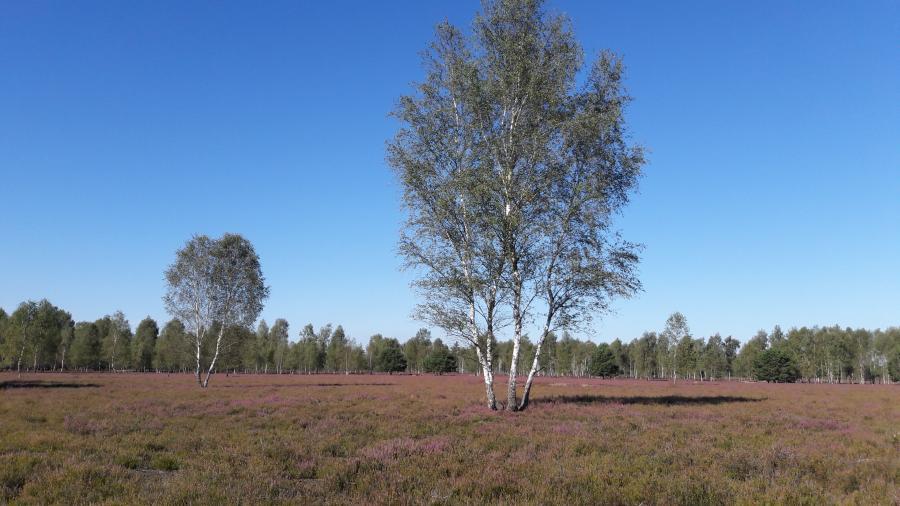 Henzendorfer Heide Foto: Besucherinformation Neuzelle