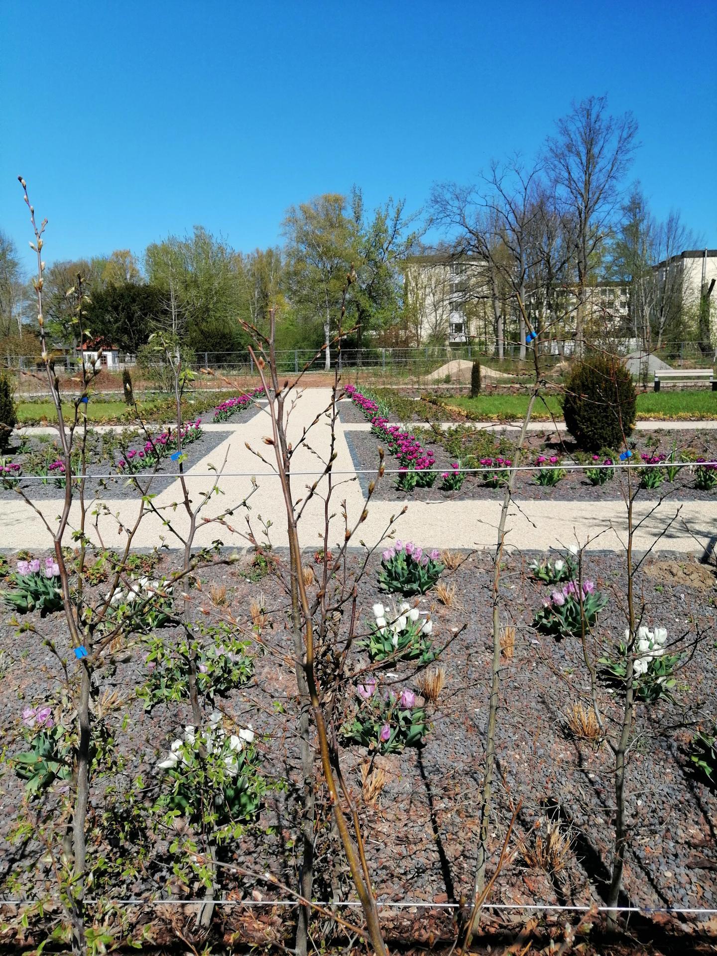 Frühling im neuen Blühgarten