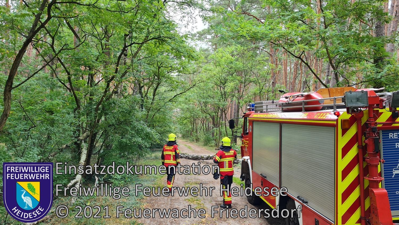 Einsatz 109/2021 | Baum auf Straße | Dannenreich Weg nach Kablow-Ziegelei | 17.08.2021