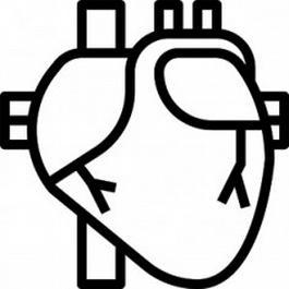 Herz und Gefäße