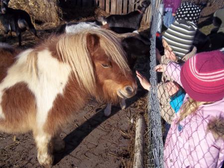 Kita Projekt Pferde