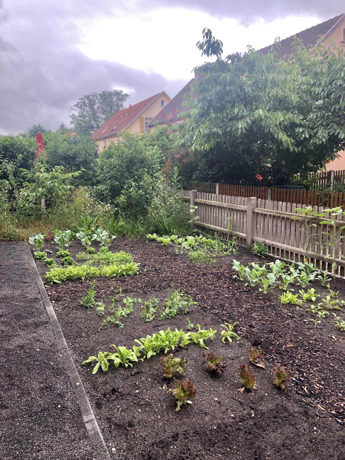 Garten Conradty Haus