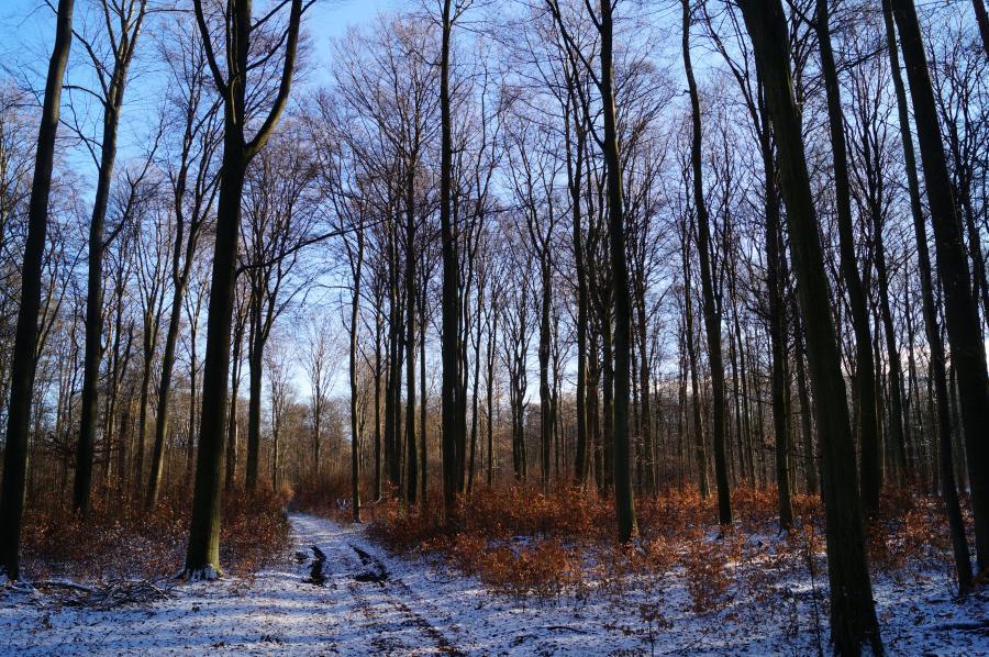 Winter - G-Gestell