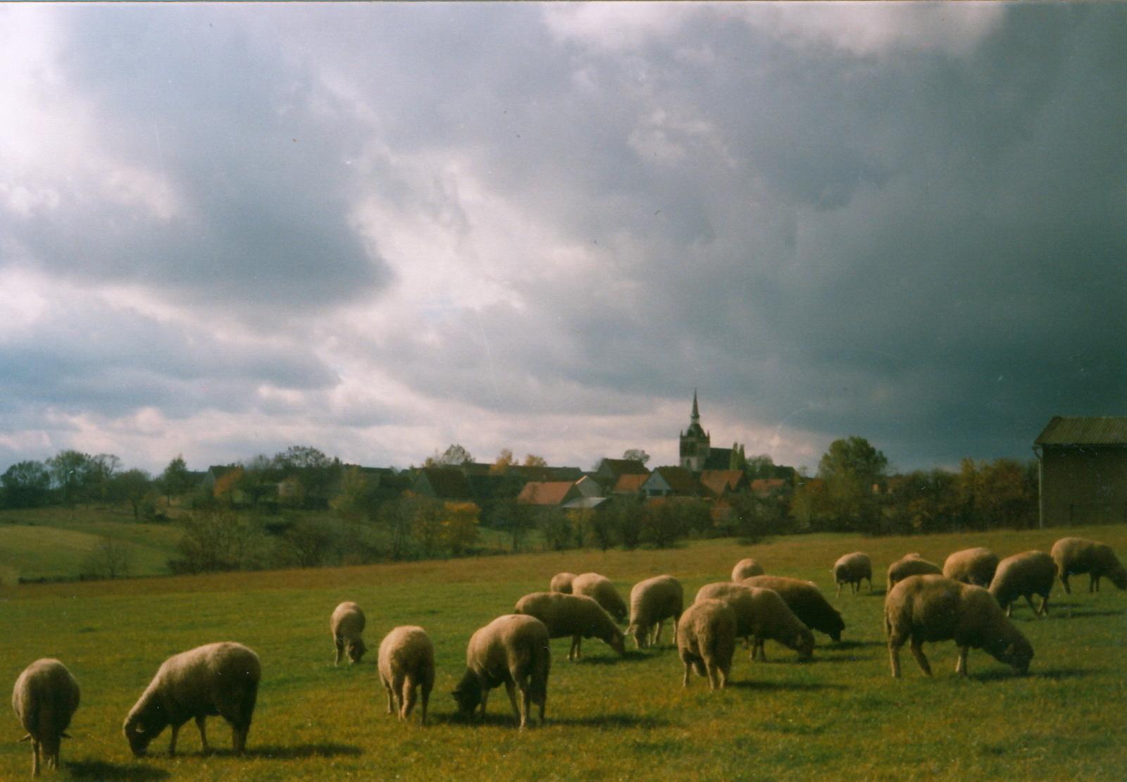 Gertchens Schafe