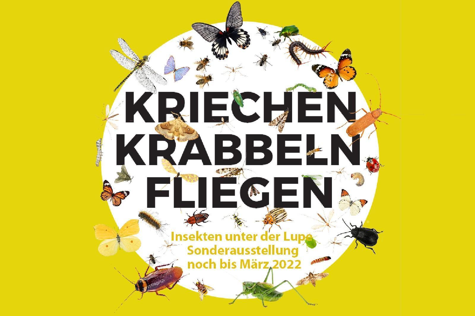 Plakat Sonderausstellung Insekten