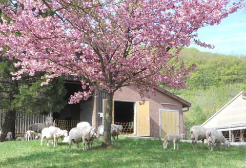 Tierbestand Schafhaltung
