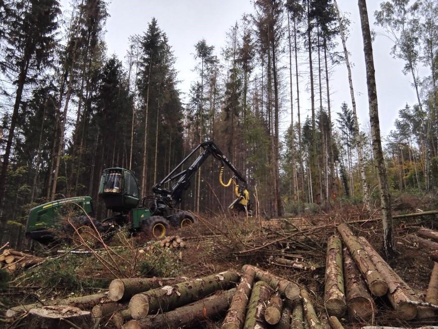 Aufarbeitung von Käferholz