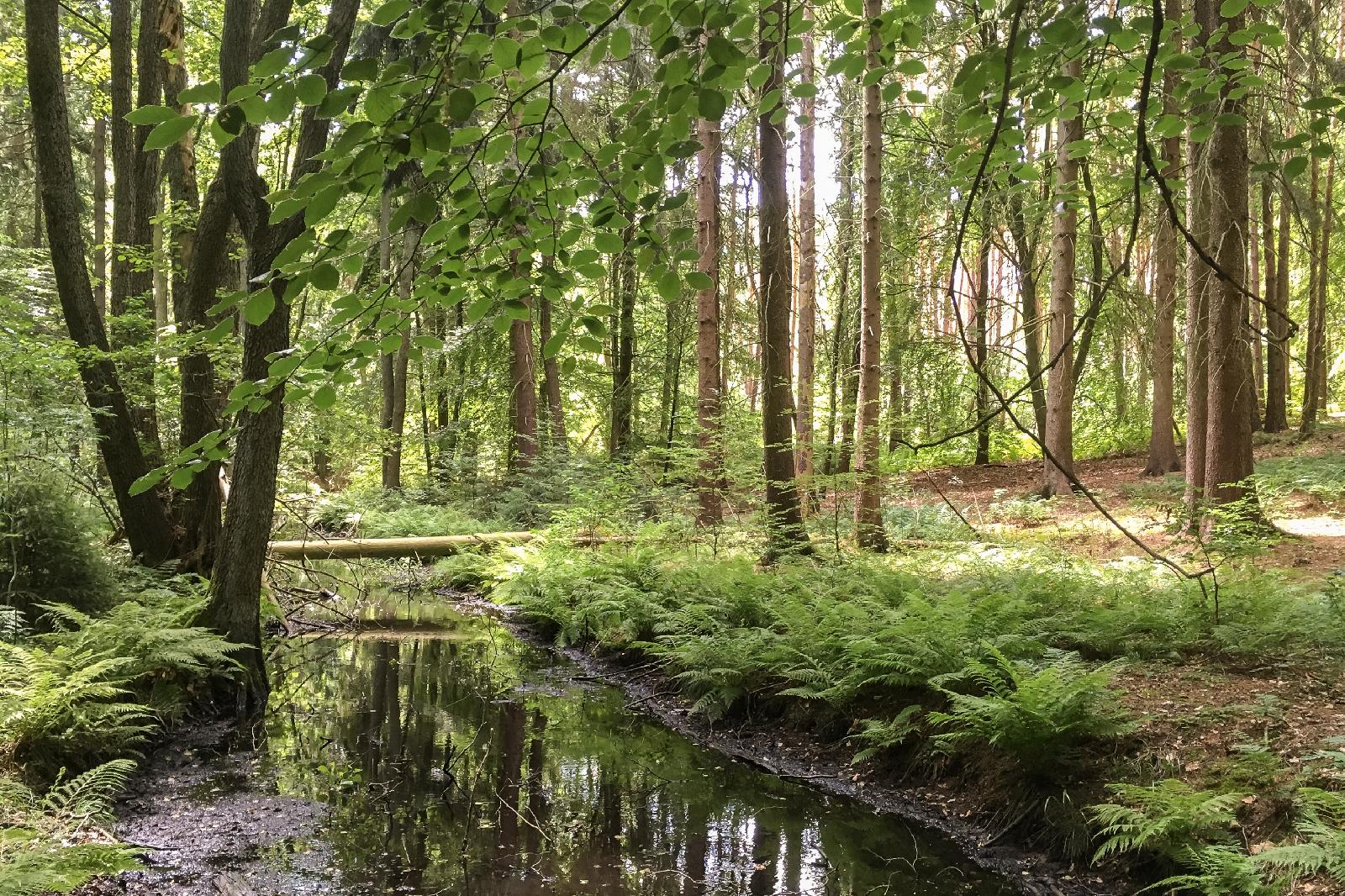 Naturpark_Barnim_Tegeler_Fliess_Foto_Weigelt