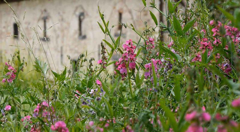 Blumen im Kloster Lehnin