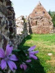 2 Siechenhaus Klostermauer mit Blüten
