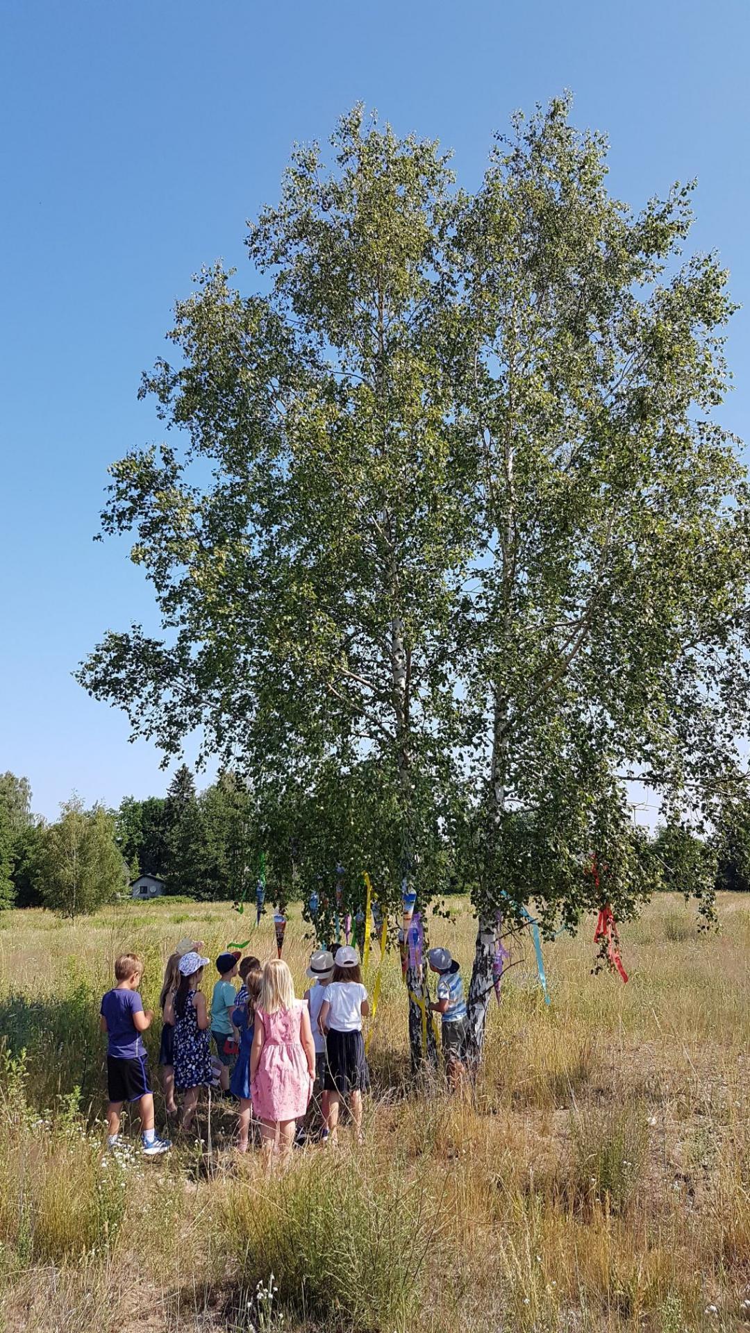 Zuckertütenbaum 2020