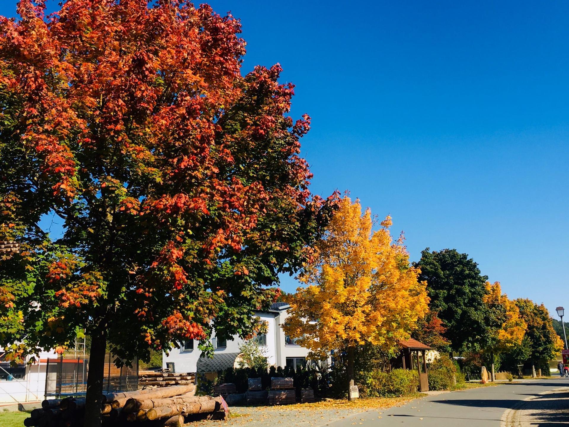 Herbstfärbung Mainkleiner Dorfstraße (Foto Sabrina Marr)
