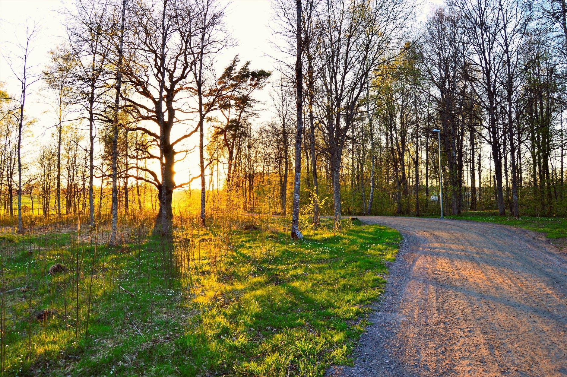 Wald Frühling