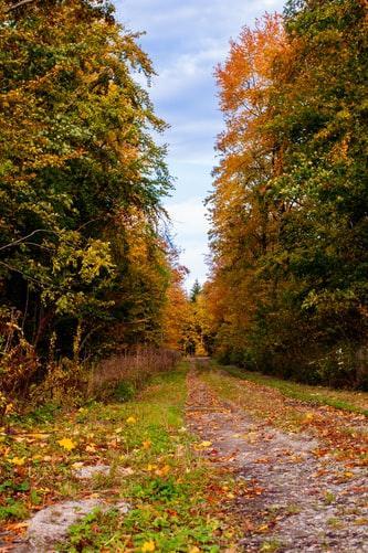 WEW Herbst