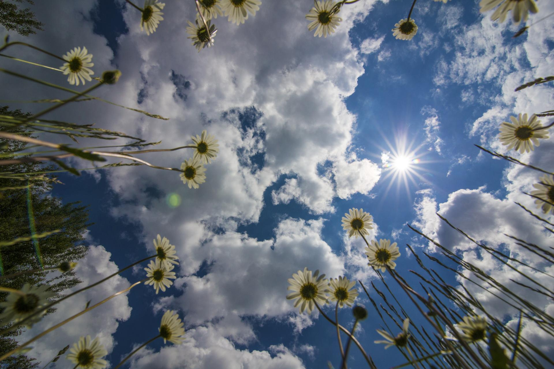 Blumen mit Himmel