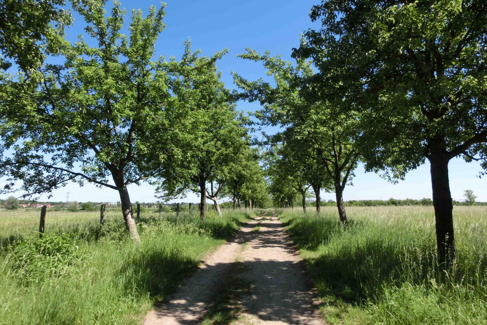 Weg durch die Falkenberger Feldmark
