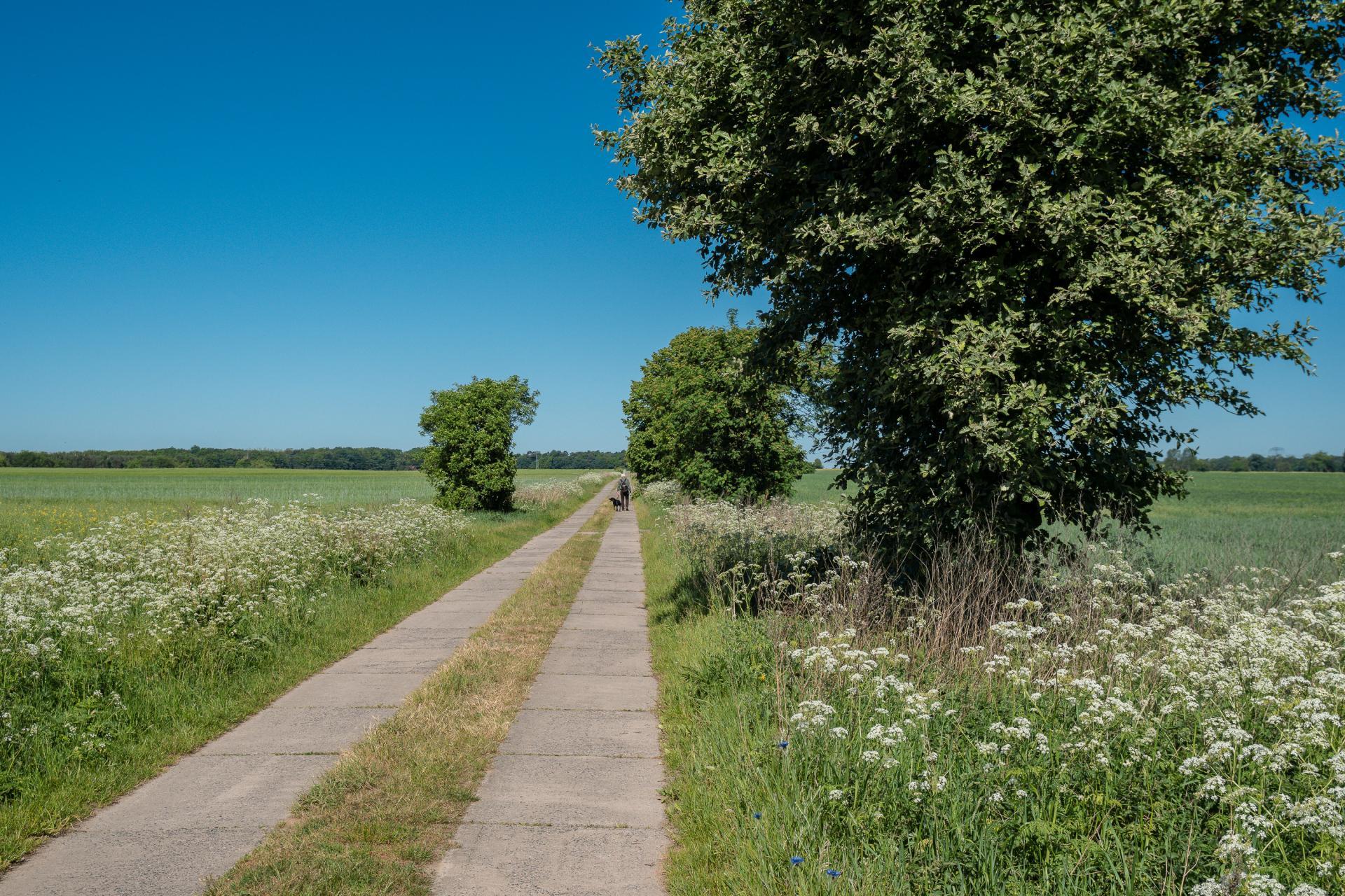 Plattenweg bei Börnicke
