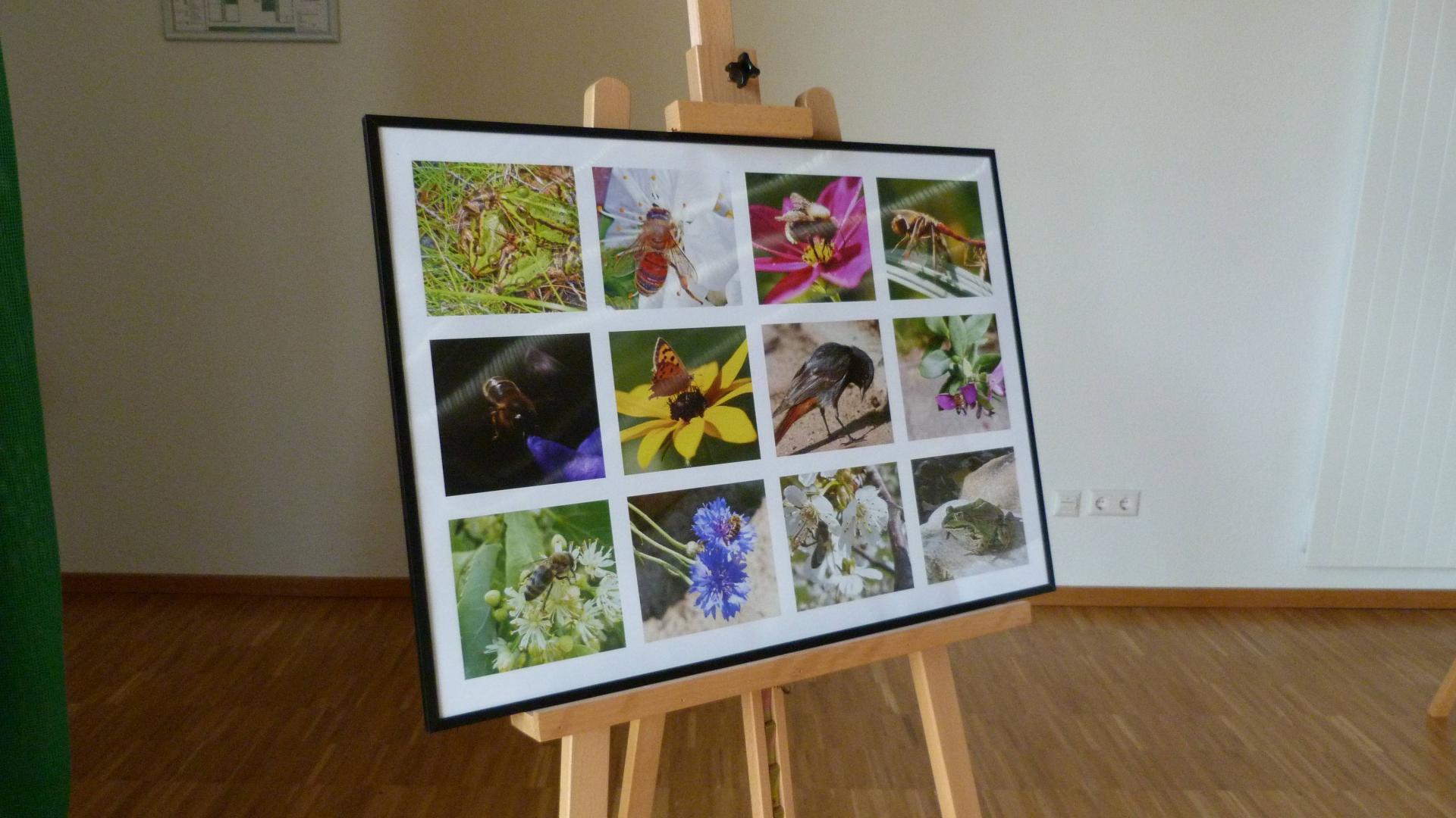 Ausstellung Fotowettbewerb