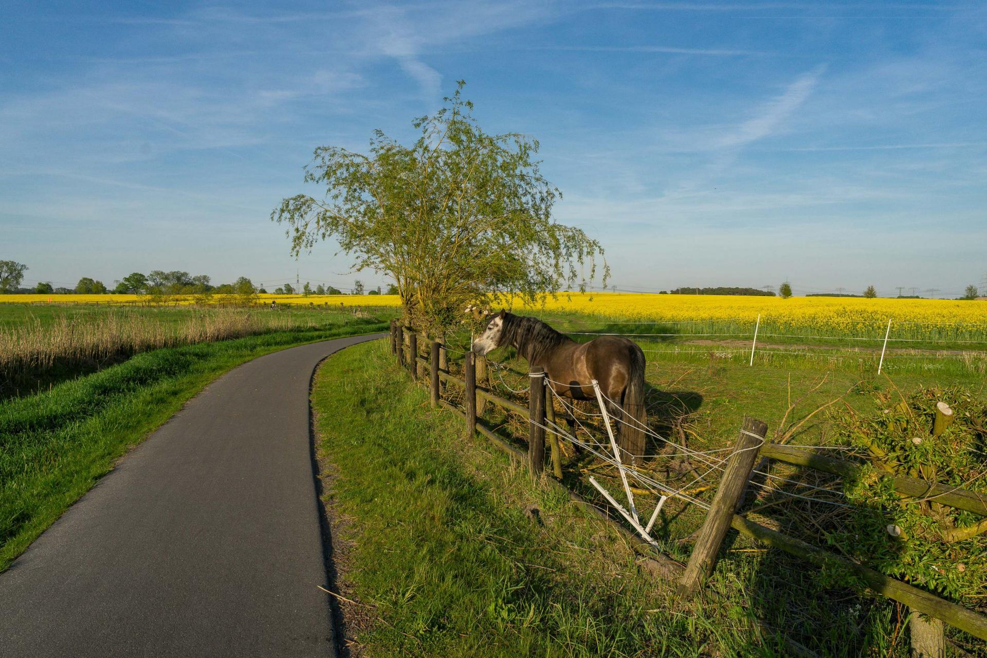 Fahrradweg an Teichgraben