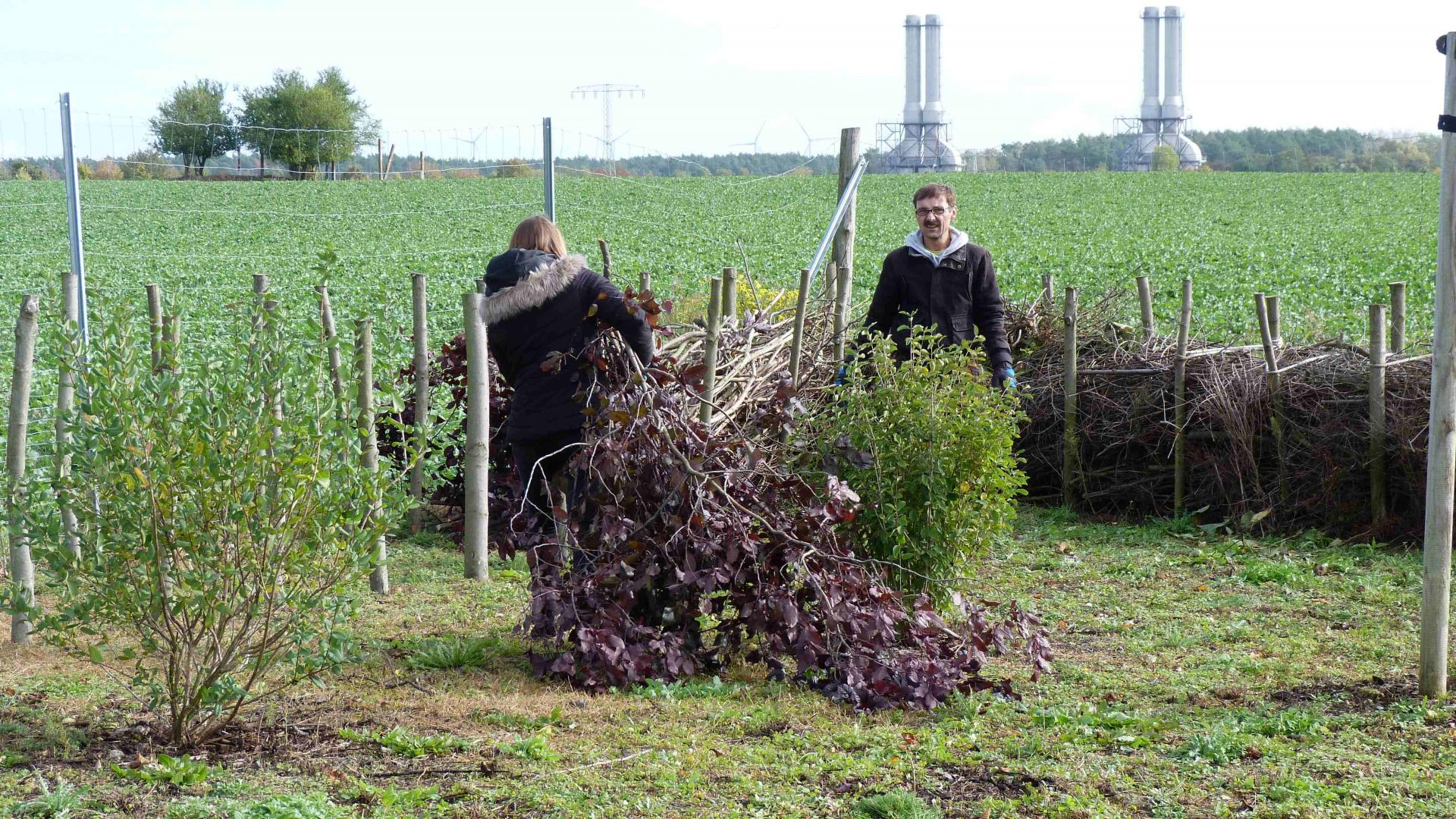 Katharina Wawra (Praktikantin) und Michel Kocerka (Mitarbeiter) beim Einbau von Gehölzschnitt