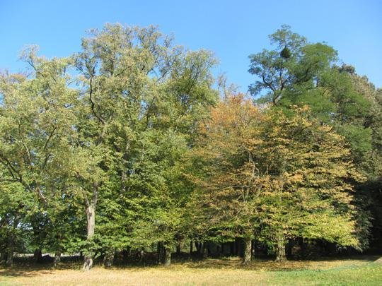 Krajobrazy parku w Hirschfelde