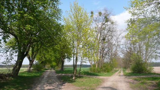 Im Gutspark Hirschfelde –  die Wege in den Gamengrund