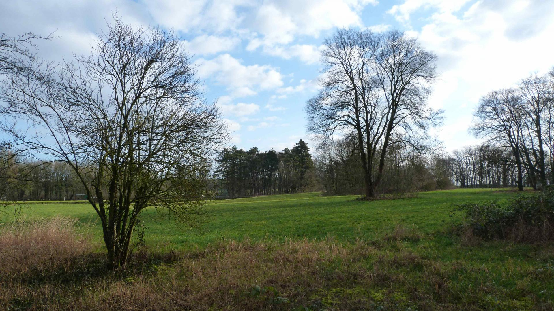Grünfläche im Gutspark Hirschfelde