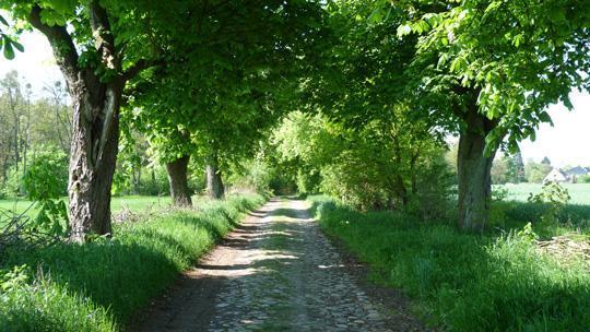 Kastanienalle zum Park Hirschfelde