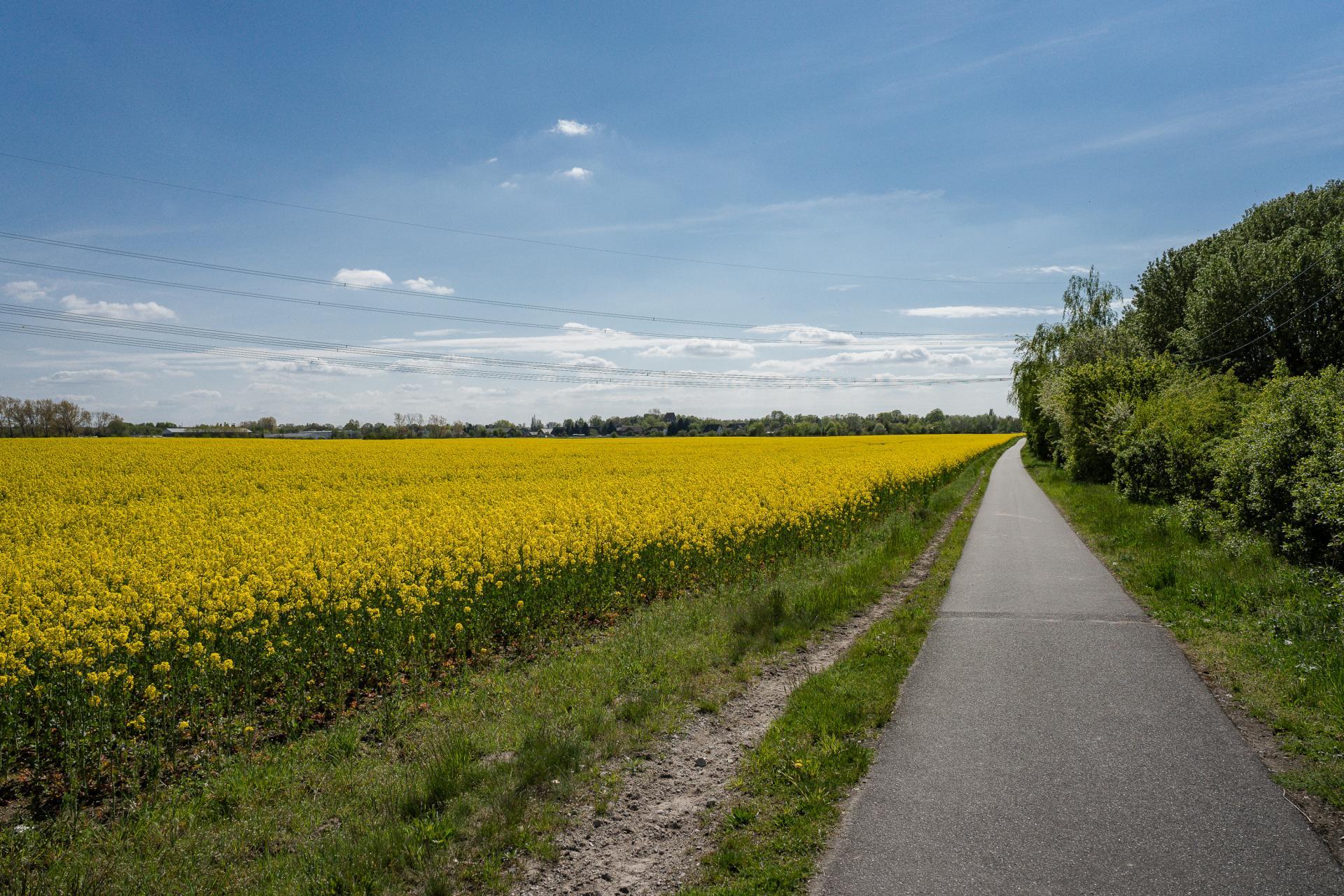 Landschaft und Radweg bei Seefeld