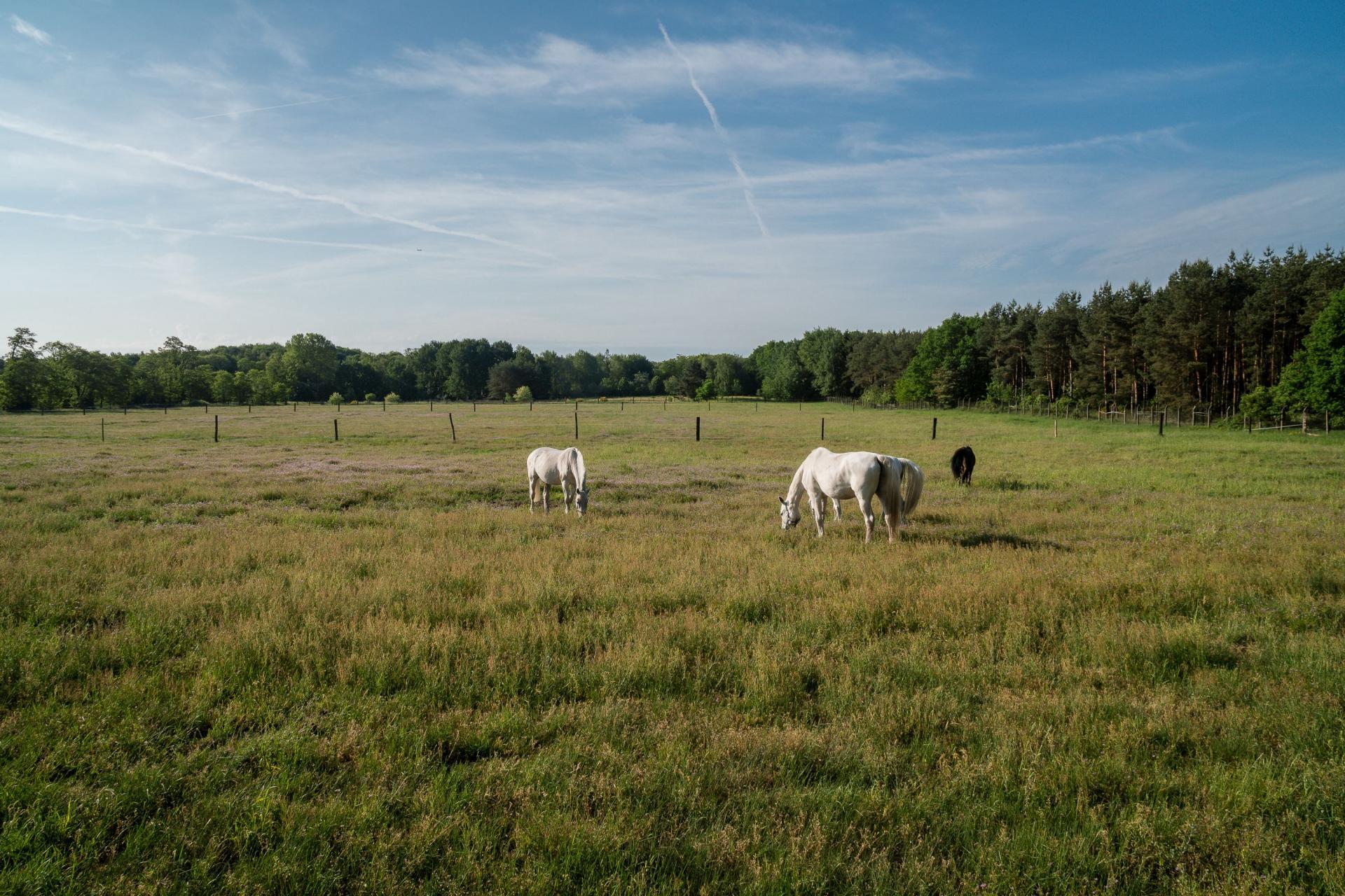 Pferde bei Helenenau