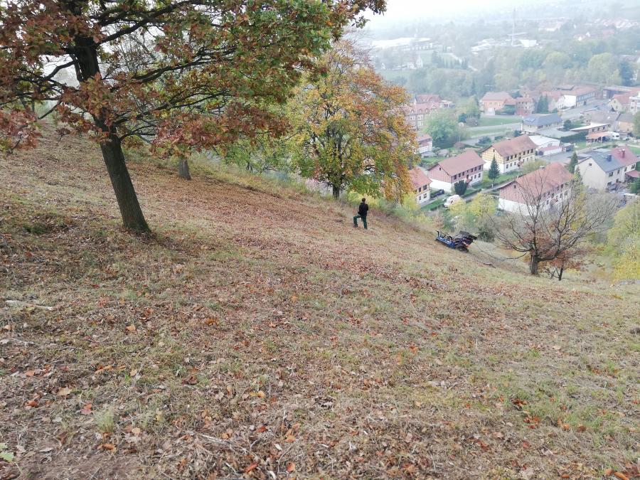 Mähraupe am Pinsenberg
