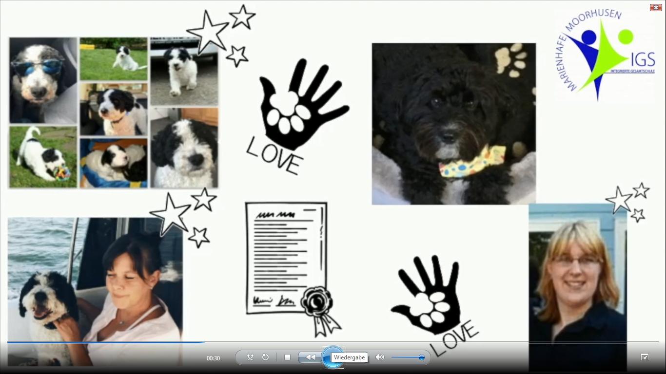 Screenshot Hunde