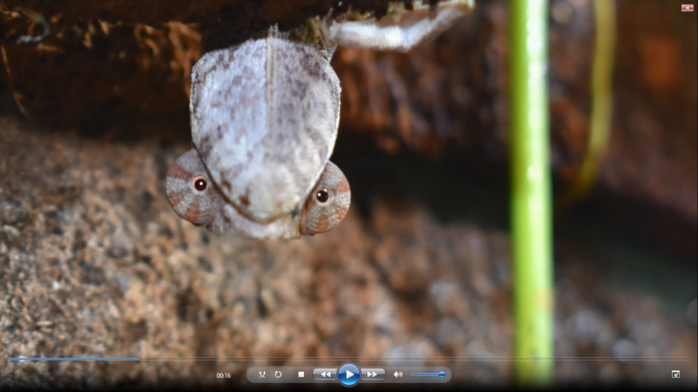 Screenshot Vivarium