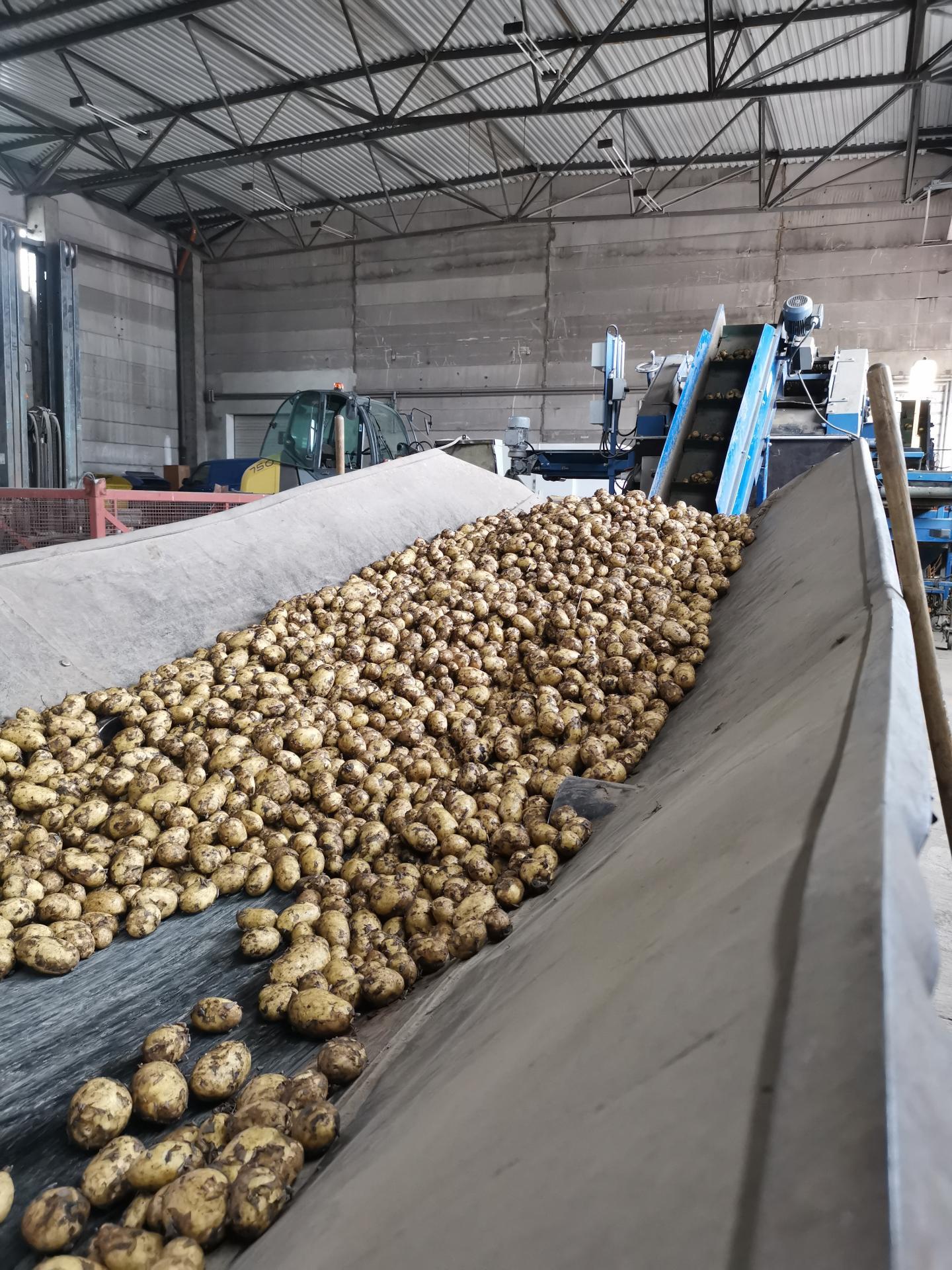 Kartoffelmaschine
