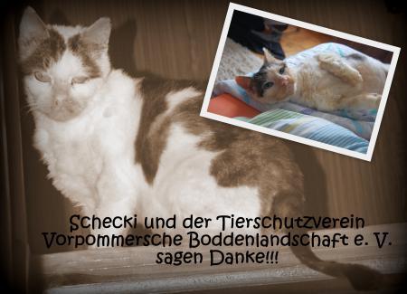 Schecki