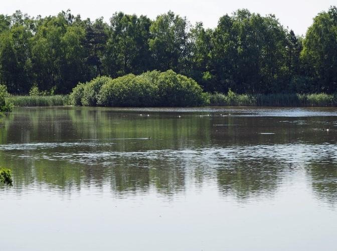 Das Wietzendorfer Moor